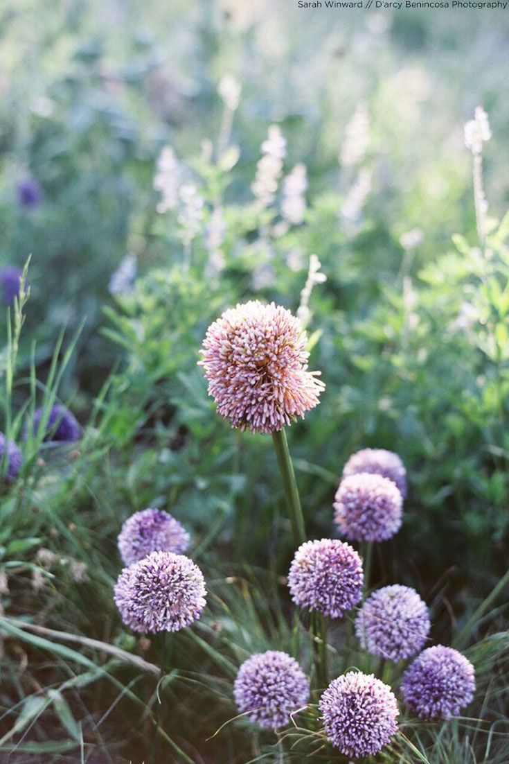 Artificial Allium Flower In Lavender 175 In 2018 Gardening