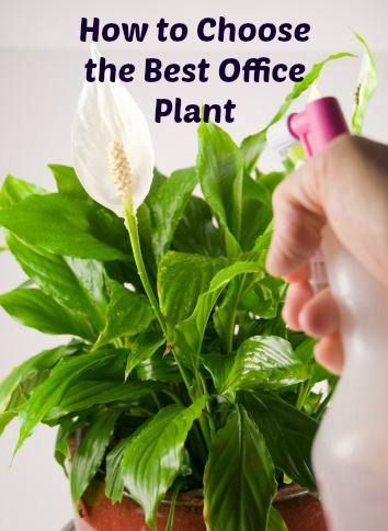 How to Choose the Best Office Plant http://blog.ambius.com/how-to-choose-the-right-office-plant-infographic/