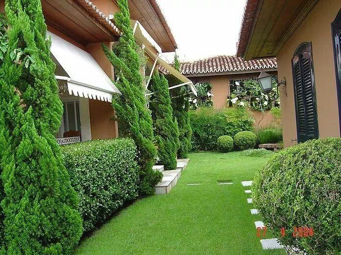Tuyas y arbustos para el verde perfecto desde nuestras for Arbustos para patios