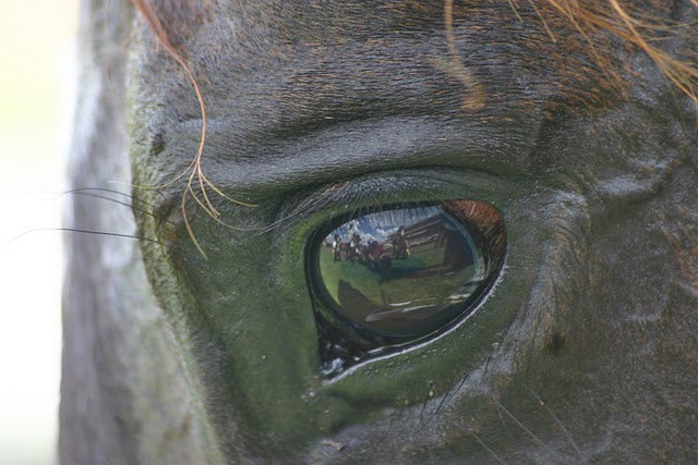 The eye of a champion - Makybe Diva