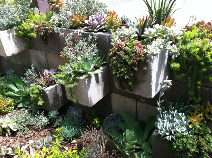 And Now I Want A Cinder Block Wall Succulents