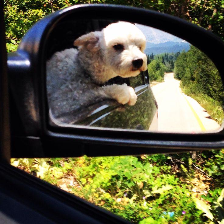#Uludağ #Dogs