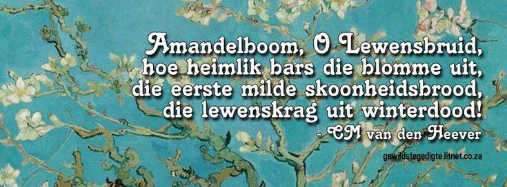 CM van den Heever #Afrikaans #gedigte