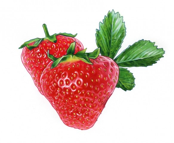 Stefan Hörberg  Strawberry for Arla