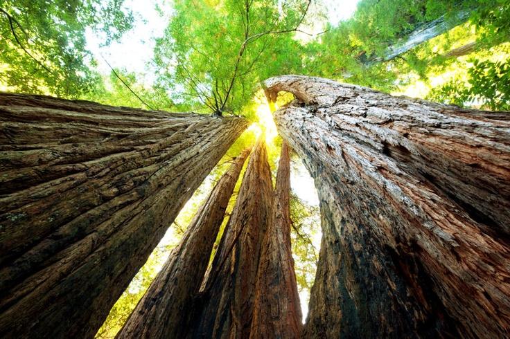 national-sequoia-park
