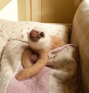 nosy sloth