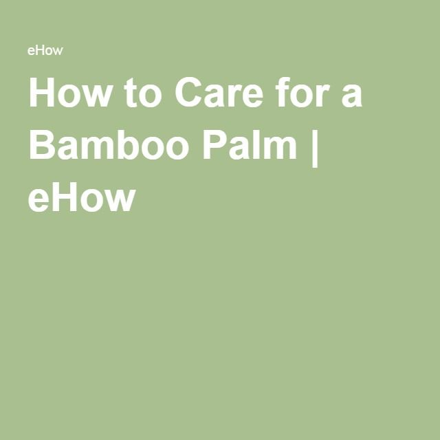 How to Care for a Bamboo Palm | eHow