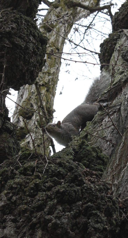 Them Vancouver Squirrels.