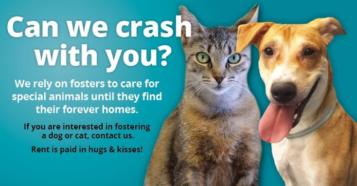 Etobicoke Humane Society Toronto Ontario In 2020 Humane Society Society Foster Cat