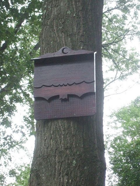 I've always wanted a bat box. I LOVE this one!