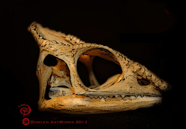 65 best chameleon anatomy images on pinterest chameleon