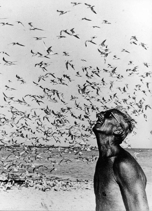 """""""Das Glück der Biene und des Delfins soll existieren. Für den Menschen ist es das zu wissen und sich darüber zu wundern"""" – Jacques Cousteau (Foto Keystone Pictu …"""