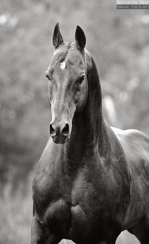 """Horses look weird without their manes.."" NO THEY DONT THEY STILL LOOK MAJESTIC~Isabelle"