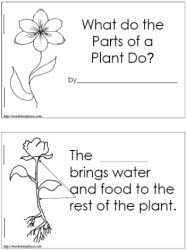 Booklets and worksheets for plant study
