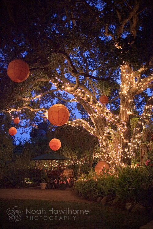 I am doing this to the cedar tree in the backyard! I want to sit out there on summer nights and read or just relax