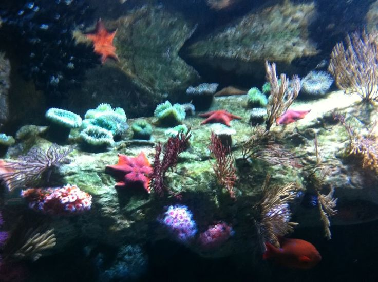 17 Best Images About Cold Saltwater Aquarium On Pinterest