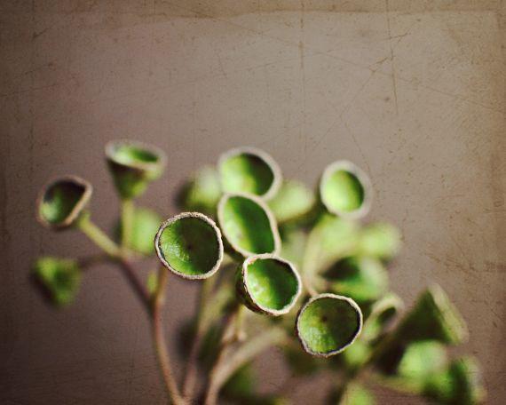 Garden by the sea - Photography blog by Lupen Grainne: Eucalyptus ...