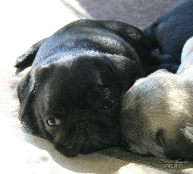 Fornax à 2 mois, fait la sieste avec ses frères.