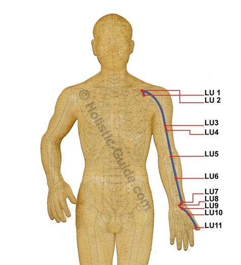 lung meridian. Contact Information http://www.kup4u.com/company/infinityflexibility http://infinityflexibility.com/wp/