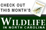 Hunting and fishing in NC