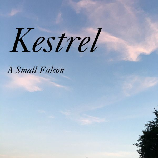 Boy Name: Kestrel; Notes: This is the name of a bird of prey.