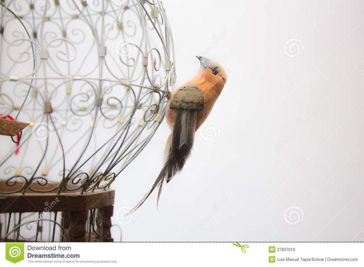 bird-sitting-outside-retro-cage-27837010.jpg (1300×956)