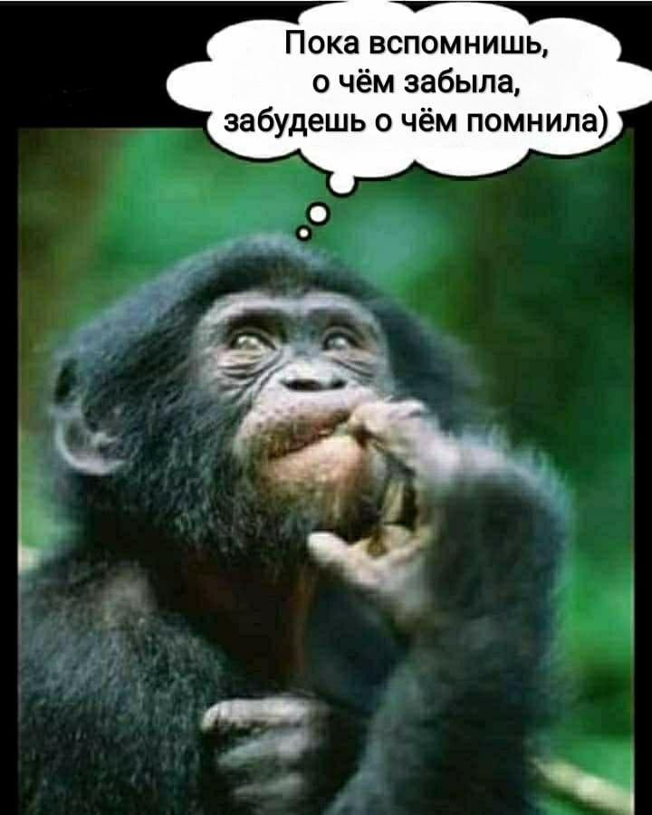 Ha Ha Ha Eto Obo Mneee Ha Ha Ha Monkey Gorilla Smart