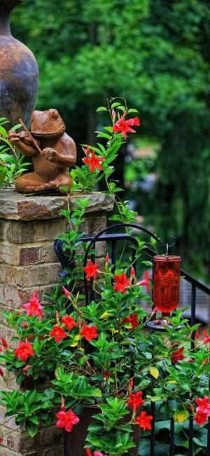Plant a Mandevilla around a hummingbird feeder,; the large red blossoms attract butterflies and hummingbirds all summer. by Josephine Harlow ❦