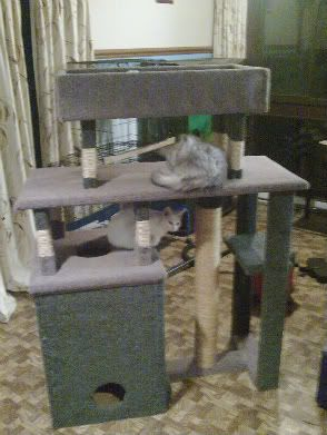167 best images about kitty things on pinterest cat tree for Build your own cat scratch tower