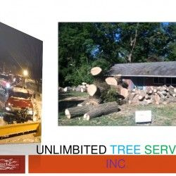 Tree Trimming Service in Columbia, MD   Visual.ly
