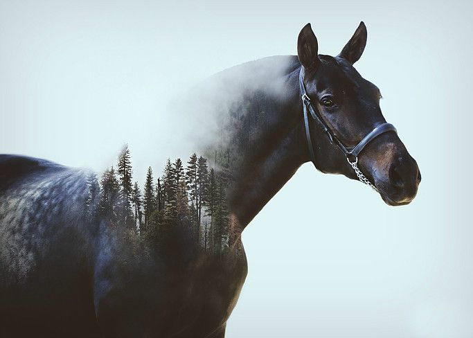Double Exposures. DOUBLE EXPOSURES on updated February 12, 2016. 7 photos by A. Meyer Photography