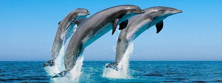 Port Stephens Dolphin Cruise