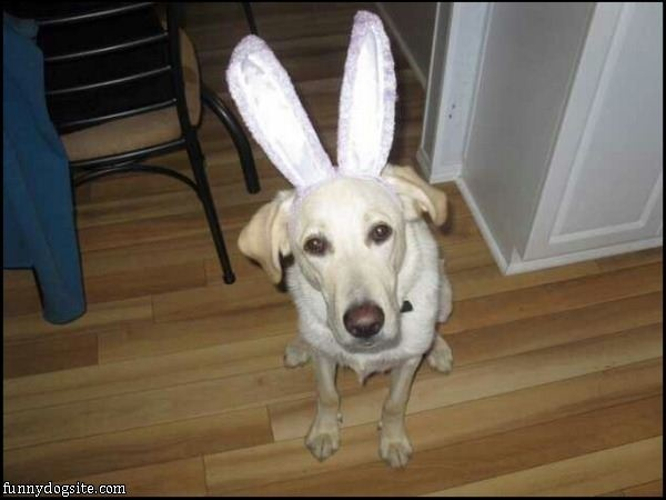 Im A Bunny: Funnydogsite Com, Funny Dogs, Pictures, Funny Quotes, Bunnies, Happy Easter