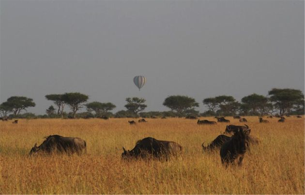 Hot air ballooning in Singita Grumeit is a once in a lifetime experience, especially during the migration!