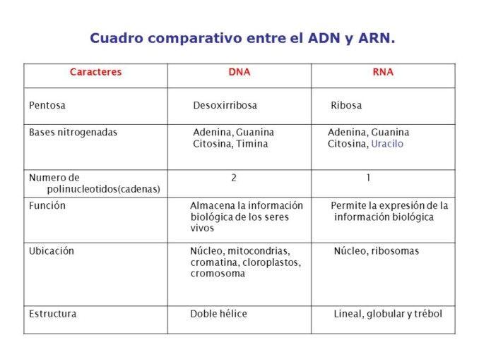 Diferencias Entre Adn Y Arn Cuadro Comparativo Adn Y Arn Molecula De Adn Maqueta Molecula Del Adn
