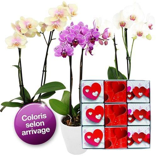 1000 id es sur le th me fleurs tropicales sur pinterest fleurs exotiques feuilles et paumes. Black Bedroom Furniture Sets. Home Design Ideas