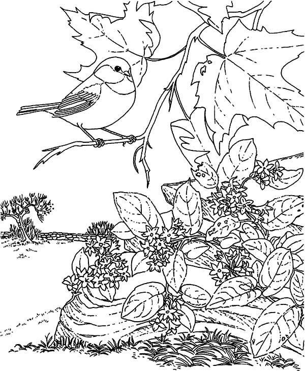 Chickadee Picture Of A Chickadee Sitting On Tree Branch