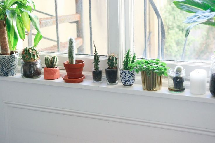 Oh SO Many House Plants… – Poppy Deyes