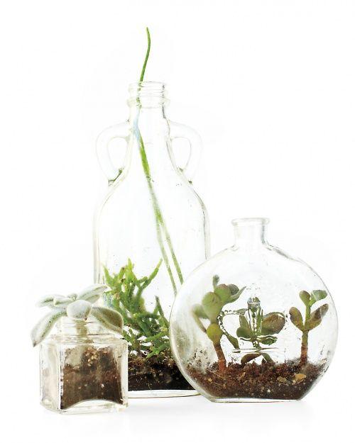 Bottle Terrariums - Martha Stewart Gardening