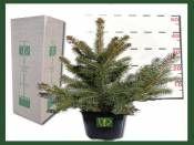 Yılbaşı Çamı Saksıda 40-60cm http://www.fidanistanbul.com/urun/936_yilbasi-cami-saksida-40-60cm-.html Fidan Satışı, Fide Satışı, internetten Fidan Siparişi, Bodur Aşılı Sertifikalı Meyve Fidanı Süs Bitkileri,Ağaç,Bitki,Çiçek,Çalı,Fide,tohum,toprak