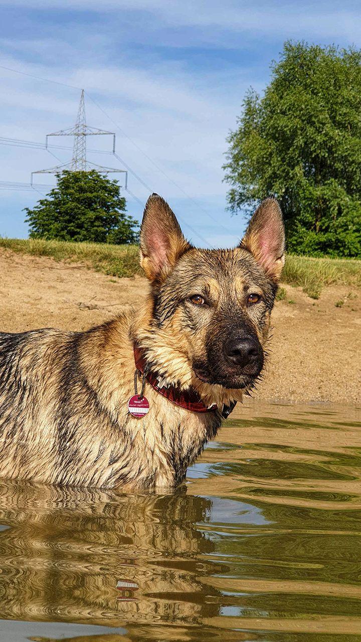 Hund Der Woche Ist Diese Woche Loui Aus Straubing Er Ist Ein