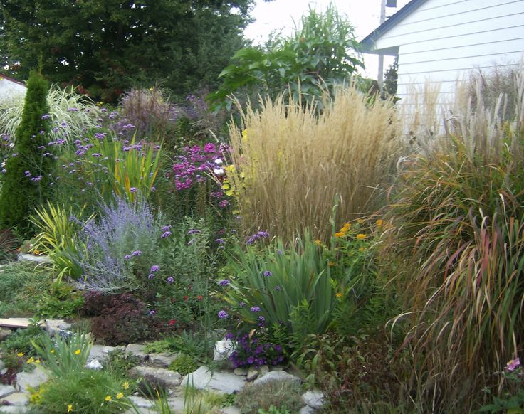 When Summer dwindles, ornemental grasses steal the show! This sunny and fairly dry flowerbed includes Miscanthus variegata (back left), M. Huron Sunrise, calamagrostis Karl Foerster, miscanthus Purpurescens with yucca, crocosmia, russiam sage, phloz, irises, butterfly weed, sedums, etc.