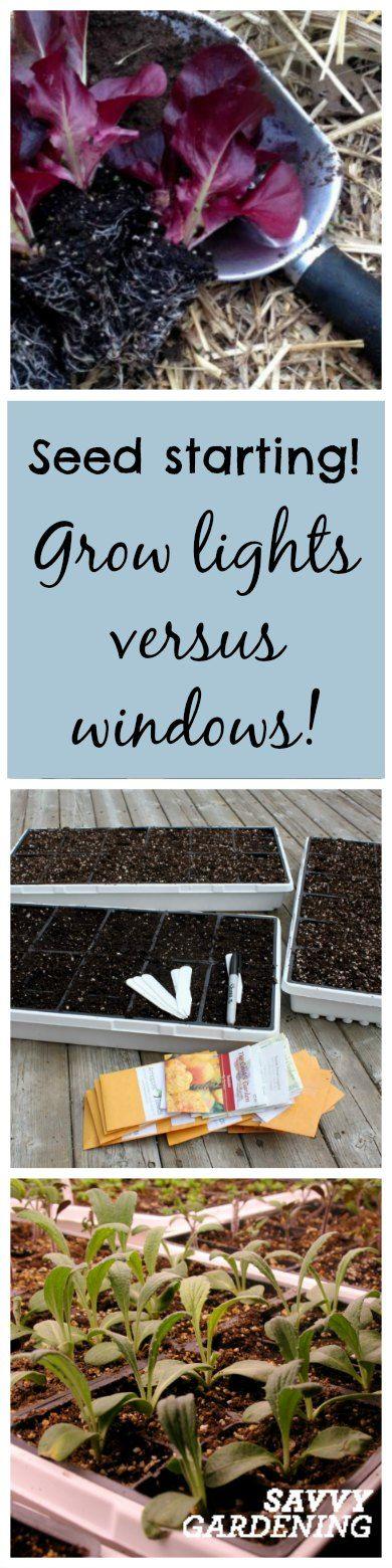 Best Way To Start Seeds: Grow Lights Or Sunny Windowsills