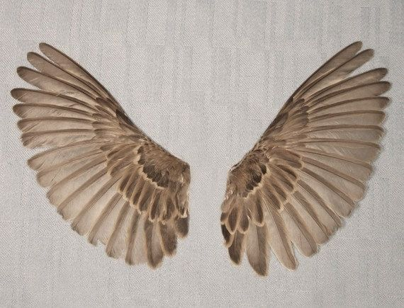 Sparrow wings adult real bird parts for taxidermy crafts for Feathered birds for crafts