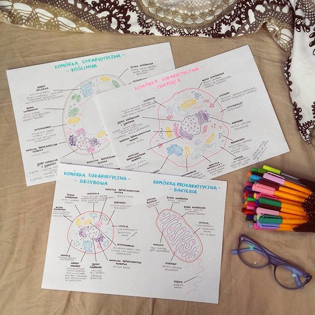 Wszystkie komórki gotowe, teraz trzeba wejść trochę głębiej i skupić się dokładnie na organellach, ale to wieczorem - tymczasem chemia entalpia i reguła przekory oraz wirusy i bakterie z biologii - łatwe i przyjemne 😀🌼📚🔬 #biologia #strukturakomórki #organella #komórka #biolchem #notatki #rysunki #motywacja #21dayschallenge #matura2017 #biology #chemistry #biochem #motivation #school #student #studyhard #wzrokowiec #kolorymająznaczenie #studygram