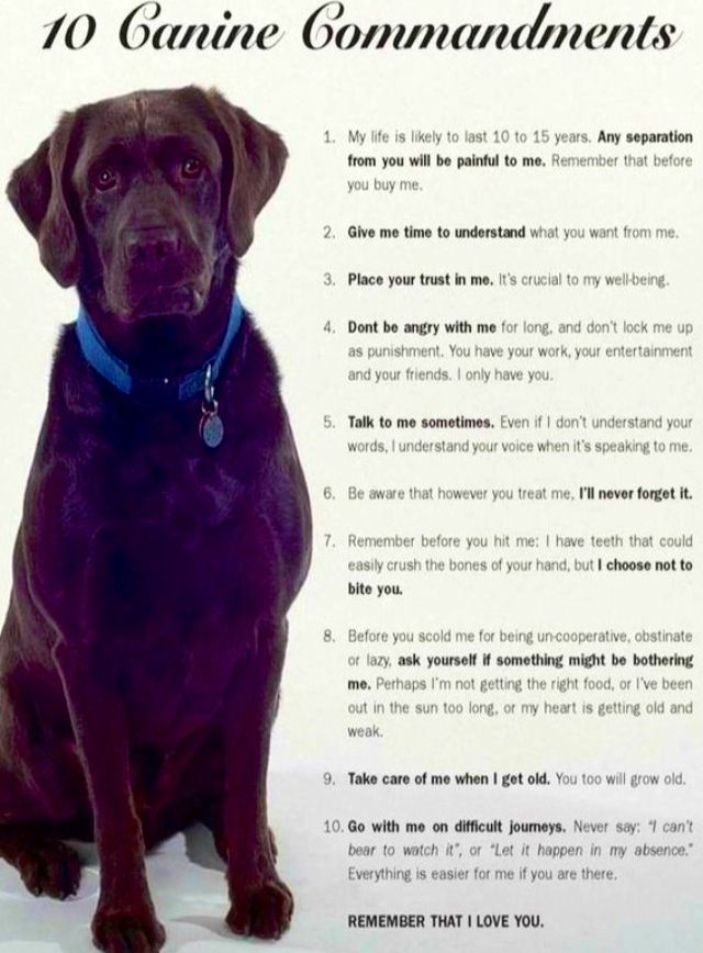 Dogs 10 commandments