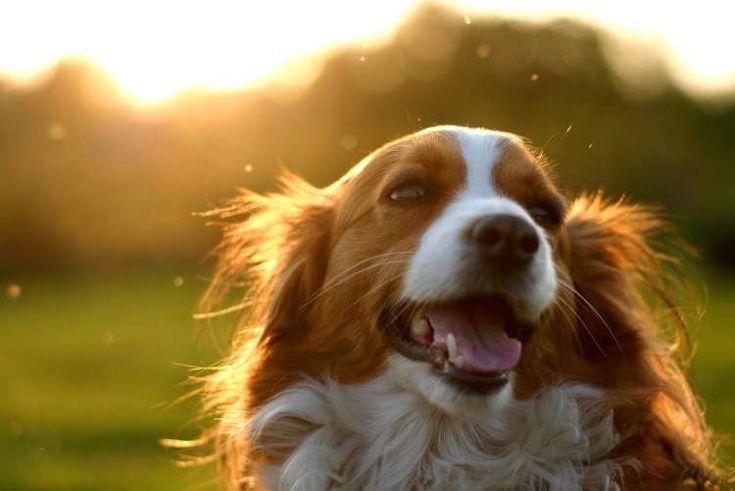 10 εκπληκτικά πράγματα που μπορεί να καταλάβει ο σκύλος σας