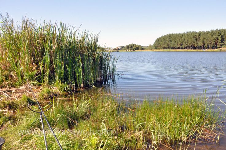 #fishing #wędkarstwo #wedkarstwo Lake in Poland. See more: http://www.youtube.com/watch?v=PLf8ESeRHxM