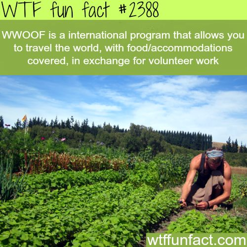 WWOOF: Travel the world in exchange for volunteering - WTF fun facts