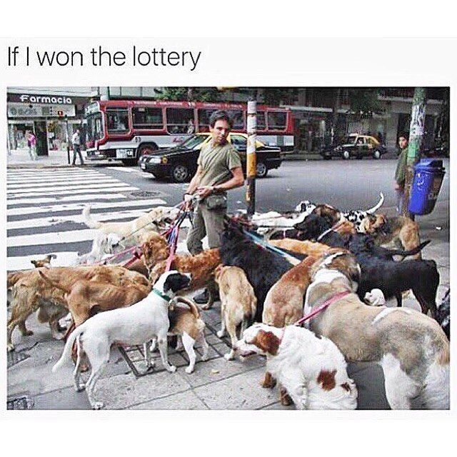 I'd save all the dogs